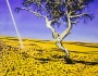 New original painting art auction desertdry